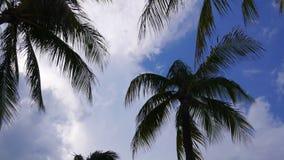 La palma del cielo blu dell'estate di Miami completa il lasso di tempo muoventesi 4k Florida S.U.A. video d archivio