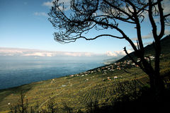 La Palma dell'isola Fotografie Stock