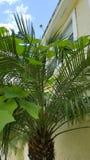 La palma e Lafayette, si sviluppano, alloggiano, cielo fotografia stock
