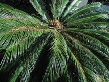 La Palma för Alcentrode Royaltyfri Foto