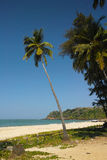 La palma, Goa Fotografia Stock
