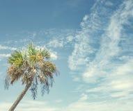 La palma perfetta il giorno soleggiato alla spiaggia fotografia stock