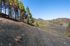La palma ruta de los vulcanos Fotografie Stock