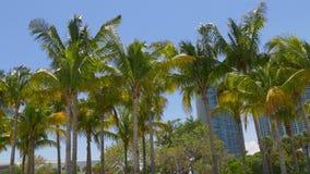 La palma soleggiata completa il panorama da Miami 4k del centro Florida S.U.A. archivi video