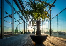 La palma sta su un terrazzo del tetto fotografia stock libera da diritti