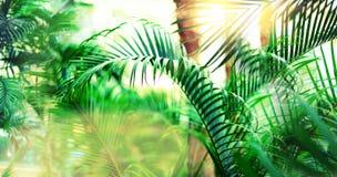 La palma tropicale con effetto e la luce del bokeh del sole cola sottragga la priorità bassa Vacanze estive, concetto di avventur Fotografia Stock