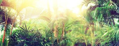La palma tropicale con effetto e la luce del bokeh del sole cola sottragga la priorità bassa Vacanze estive, concetto di avventur Fotografia Stock Libera da Diritti