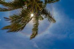 La palmera del coco con el sol brillante, el halo y el sol irradia fotos de archivo libres de regalías
