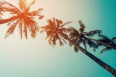 La palmera del coco y el cielo azul con el vintage filtran Foto de archivo