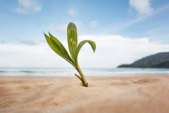 La palmera joven crece en la playa Imágenes de archivo libres de regalías