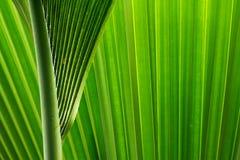 La palmera sale de I Imagen de archivo