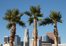 LA Palms. Palm trees and highrise office towers of downtown Los Angeles, California Stock Image