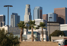 LA Palms and Towers Stock Photos