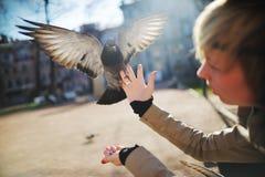 La paloma con las alas abiertas se sienta en la mano de la muchacha Foto de archivo libre de regalías