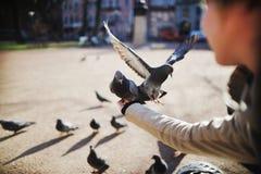 La paloma consigue en vuelo en las manos de una muchacha Fotografía de archivo libre de regalías