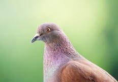 La paloma le mira Imagenes de archivo