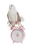La paloma se sienta en el reloj de alarma labrado viejo Foto de archivo