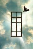 La paloma vuela al cielo Imagen de archivo libre de regalías