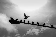 La paloma vuela solamente Fotografía de archivo