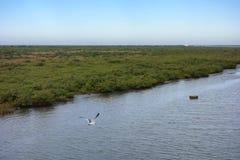 La palude della Luisiana fotografie stock libere da diritti