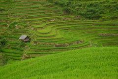 La pan tan rice terrace Royalty Free Stock Photography