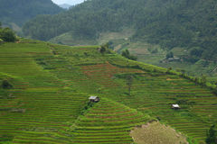 La pan tan rice terrace Royalty Free Stock Images