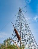 La pannocchia di cattail su un fondo della torre ad alta tensione di sostegno Fotografie Stock