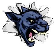 La pantera se divierte brecha de la mascota Imagen de archivo