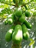 La papaia Fotografia Stock