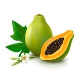 La papaye porte des fruits avec la feuille et la fleur sur le fond blanc Image stock