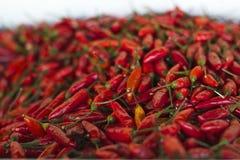 La paprica fresca dei peperoncini aromatizza il colore rosso luminoso di piri di piri dei peri dei peri di cucina Fotografia Stock Libera da Diritti