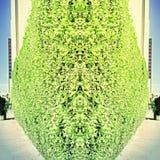 La pared de la hierba Foto de archivo