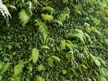 La pared de la planta dentro pone verde la relajación 4k Imágenes de archivo libres de regalías