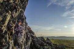 La pared de la roca Imagen de archivo