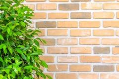 La pared de ladrillo anaranjada adorna con las hojas verdes Imagenes de archivo