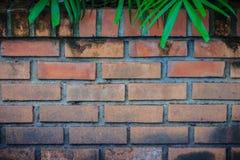 La pared de ladrillo roja vieja con verde natural sale del marco Palma verde l foto de archivo