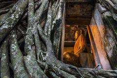La pared de ladrillo y el árbol viejos de la iglesia de la estatua de Buda arraigan en Wat Bang Kung Samut Sakhon Tailandia Foto de archivo