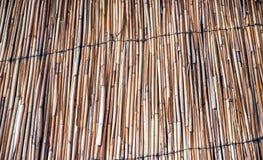 La pared de los tallos de lámina fotografía de archivo libre de regalías