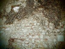 La pared de piedra vieja con una planta seca fotografía de archivo
