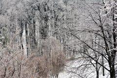 La pared del bosque del hielo con el detalle de madera en el primero plano imagen de archivo libre de regalías