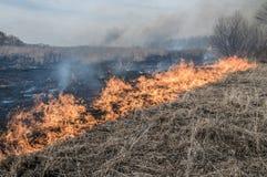 La pared del fuego quema la hierba seca Foto de archivo