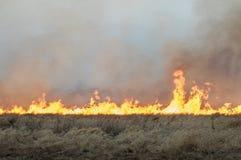 La pared del fuego quema la hierba seca Fotos de archivo libres de regalías