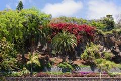 La pared floreciente en el terraplén de Funchal imágenes de archivo libres de regalías