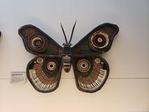 La pared recicla la mariposa fotografía de archivo libre de regalías