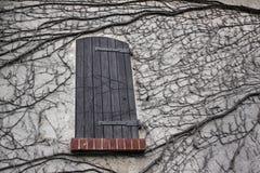 La pared se cubre con la hiedra y la ventana Imagenes de archivo