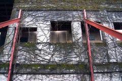 La pared vieja con los agujeros de las ventanas y seca la hiedra de serpenteo Imagen de archivo