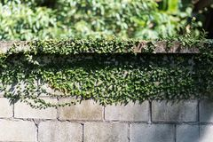 La parete con la pianta Fotografia Stock Libera da Diritti