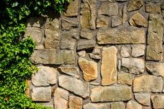 La parete dell'arenaria blocca invaso dall'edera 9 Immagini Stock Libere da Diritti