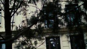 La parete della casa moderna bianca è nascosta dai rami dell'abete archivi video