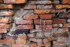 La parete della radice Fotografie Stock Libere da Diritti